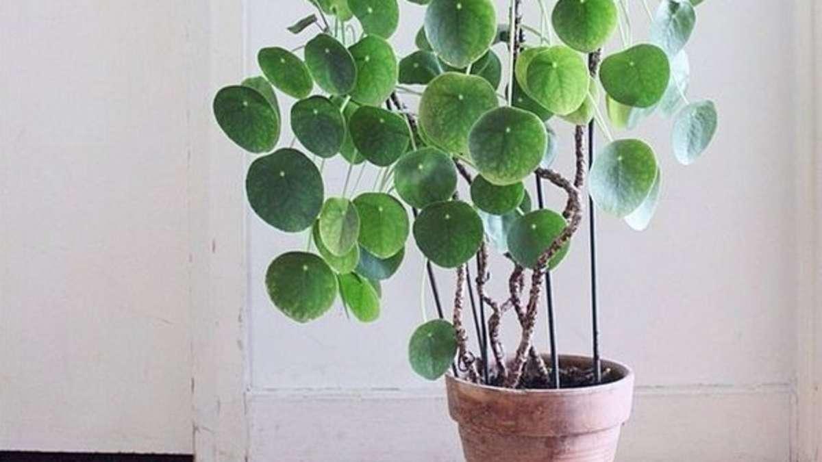 diese zimmerpflanzen sind absolut pflegeleicht wohnen. Black Bedroom Furniture Sets. Home Design Ideas
