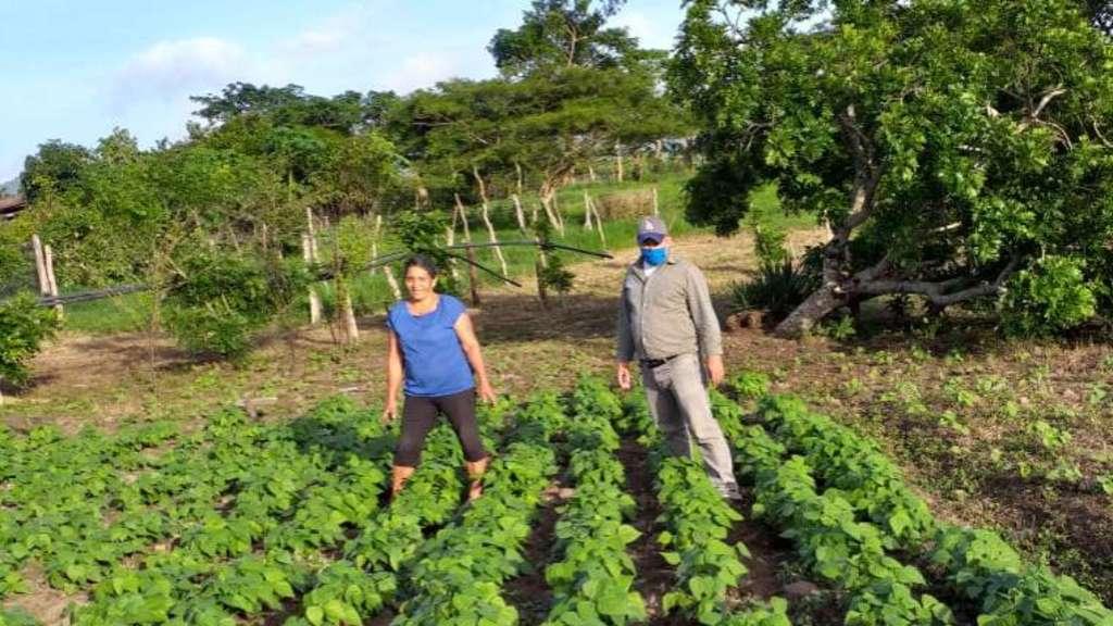 Nach den großen Überschwemmungen im Herbst vergangenen Jahres hoffen die Landwirte in Jinotega im Norden von Nicaragua darauf, im Frühjahr nach den ersten Regenfällen wieder Bohnen anpflanzen zu können. Fotos: Städtefreundschaft mit Jinotega